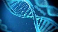 შესაძლებელია თუ არა დნმ-ის დაპატენტება?