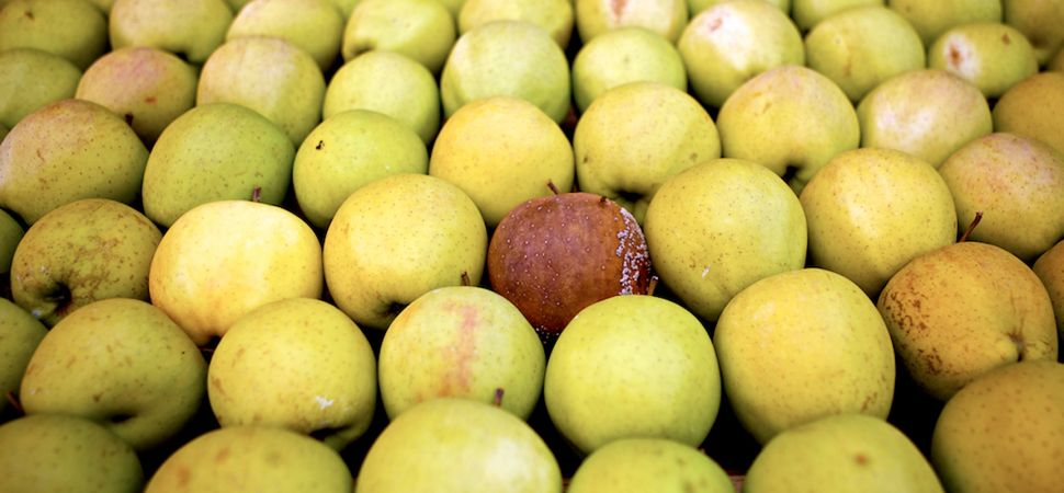 ცუდი თანამშრომელი – გაფუჭებული ვაშლის პრინციპი